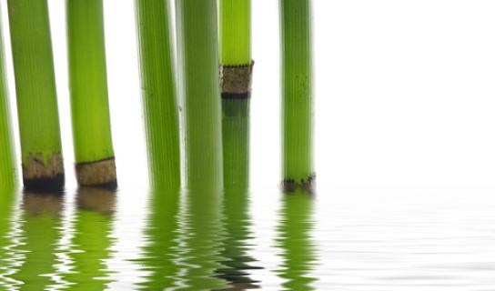 dreamstime_xs_7943024 - Bamboo Reflections.1c08abe4dad6b788098802c347f0a528219